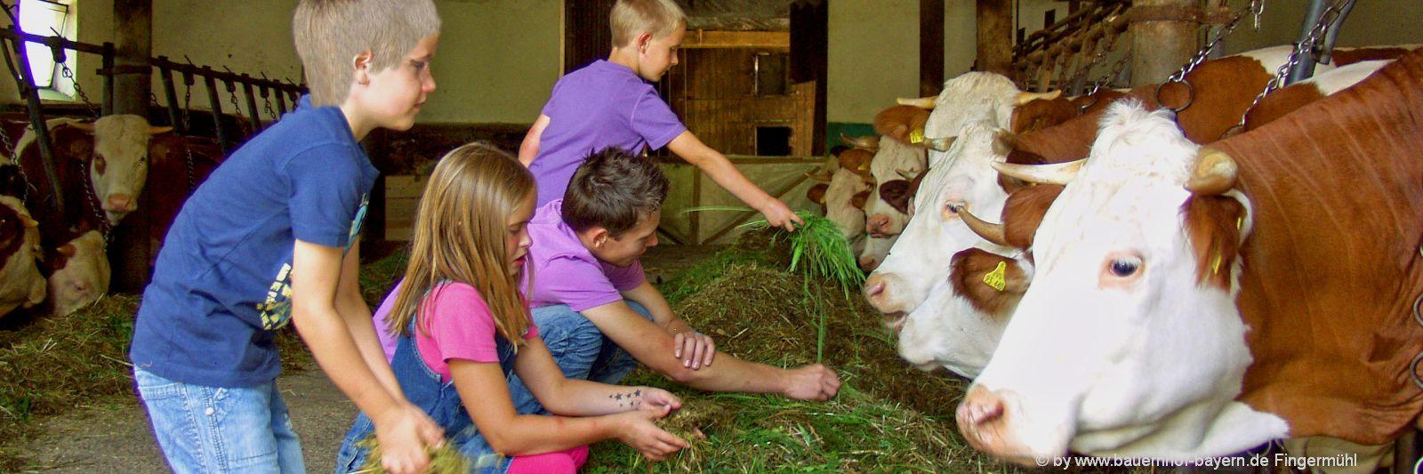 bayern-bauernhofurlaub-familienurlaub-mithelfen-kuhstall-tiere-füttern